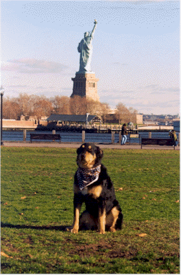 My favorite 9/11 TDI dog, Wusel